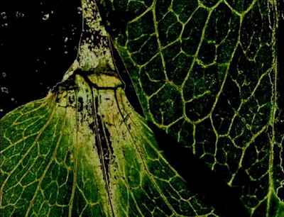 THE GARDEN OF EARTHLY DELIGHTS de Stan BRAKHAGE