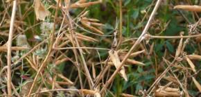 Mardis du Jardin C / Octobre - Novembre