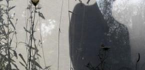 E.T. Cécile Clos - Un Jardin dans la Ville
