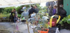 Troc-plants baladeurs de l'Île vol.2