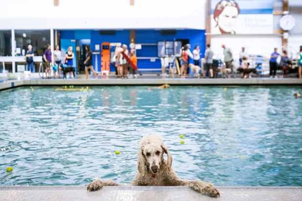 Dogs At Swimming Pool