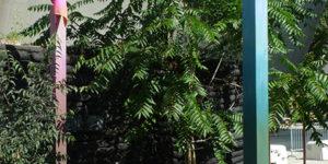 MBDTCurators_FloraMoscovici_jardinC_saisonspartagees_4